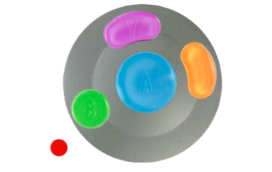 Button Builder