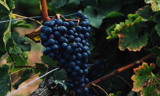 Wein und Cava