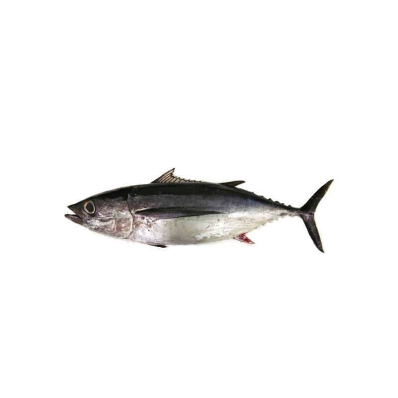galicischer-frischer-fisch