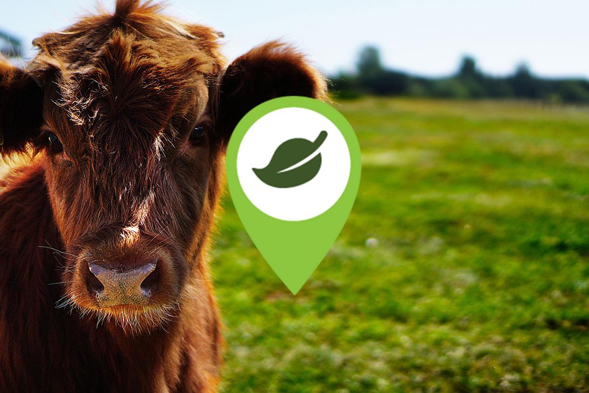 Bæredygtige veganske produkter