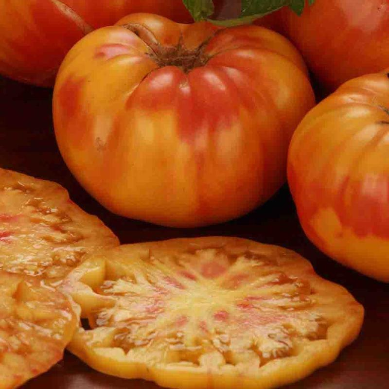 Shop Big Rainbow Tomato Heirloom Seeds