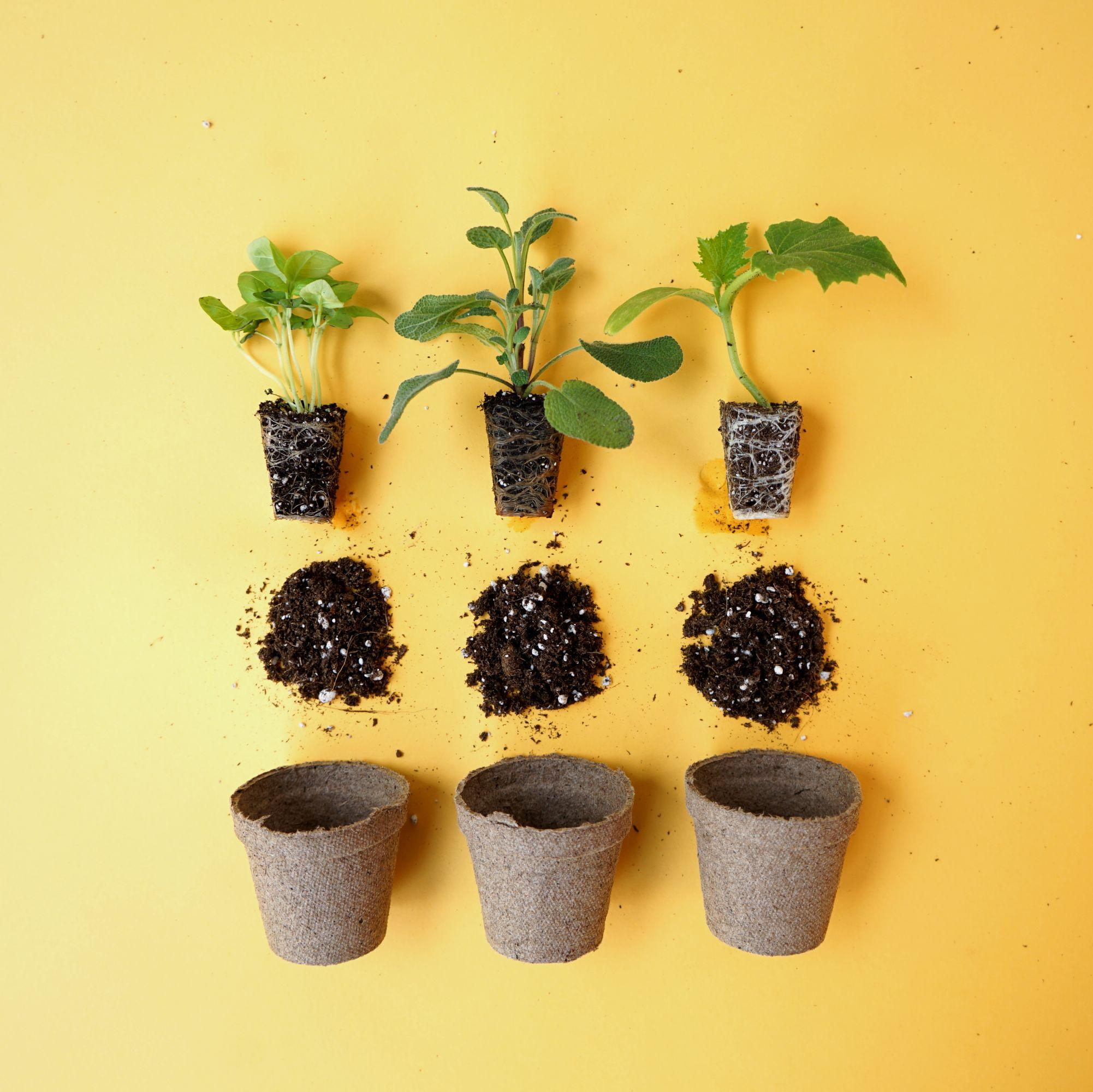 Ferry Morse Herb Seeds