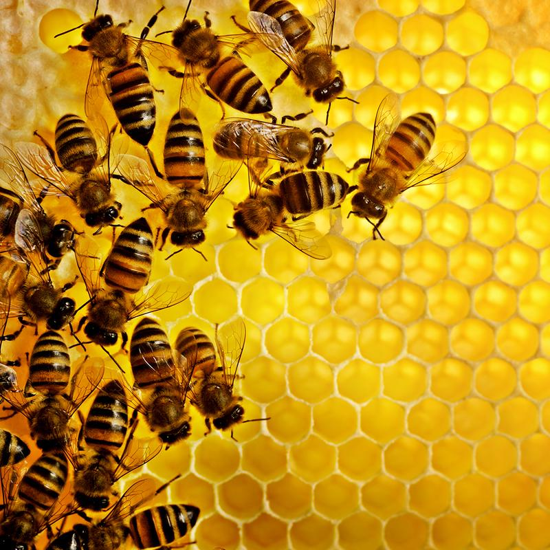 Ferry Morse Pollinator Gardening Kit