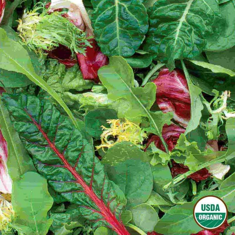 Shop Organic Mesclun Garden Seeds