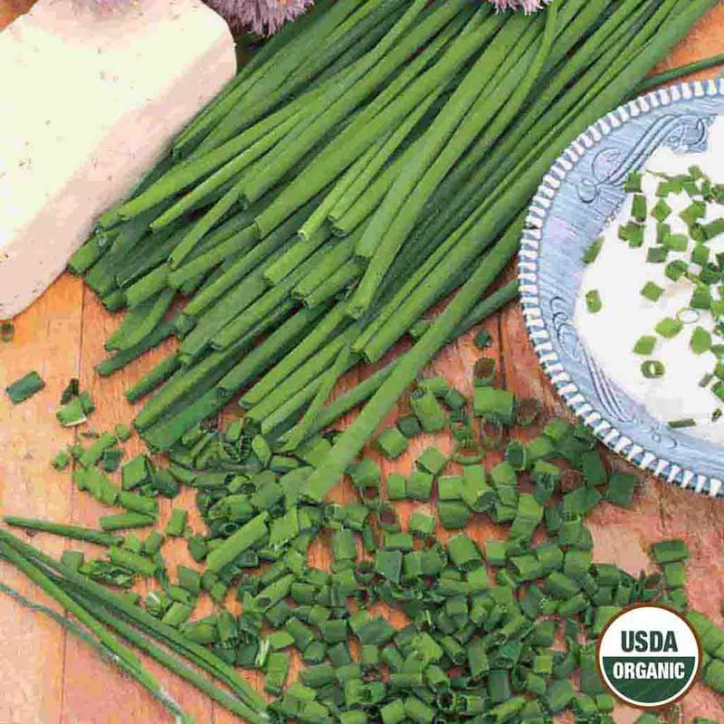 Shop Organic Chive Herb Seeds