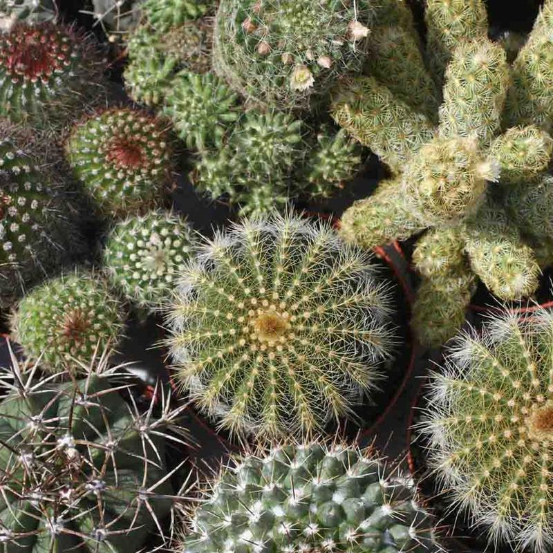 Shop Mixed Cactus Seeds