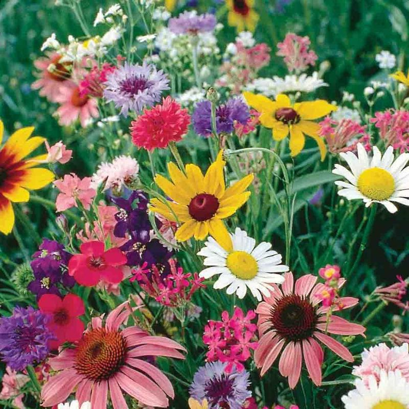 Shop Wildflower Mixed Flower Seeds