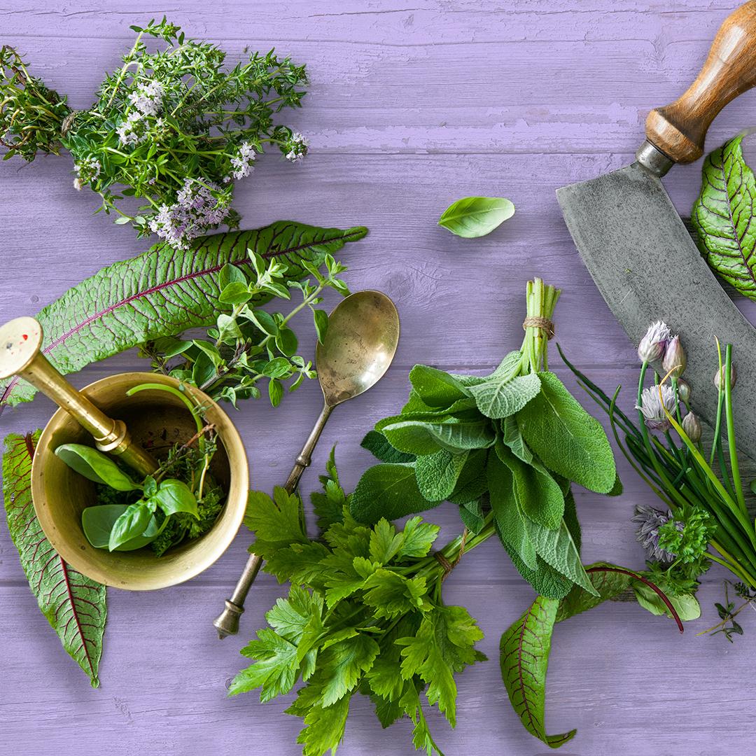 Shop Ferry Morse Healing Plants Gardening Kit