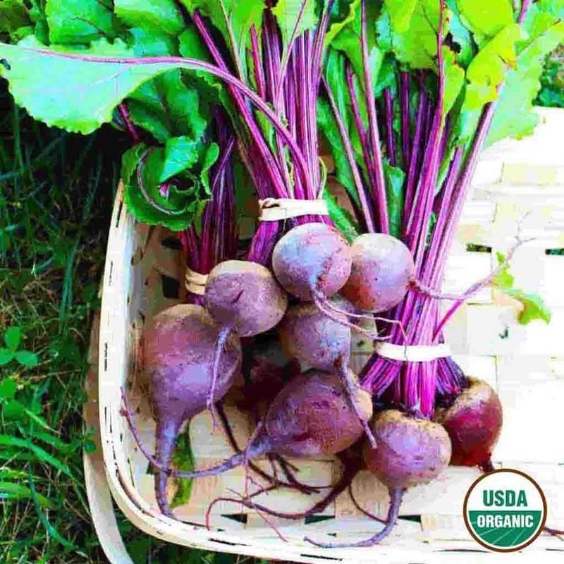 Shop Organic Tall Top Beet Garden Seeds