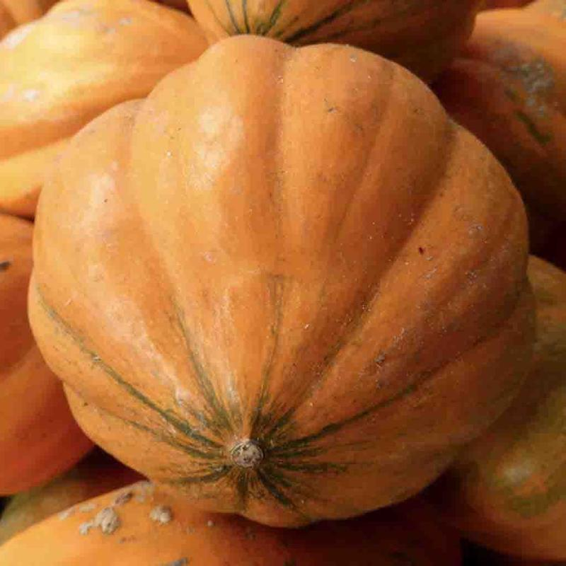 Shop Amish Pie Pumpkin Heirloom Seeds
