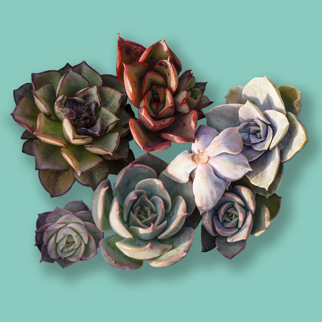 Shop Ferry Morse Succulents Gardening Kit