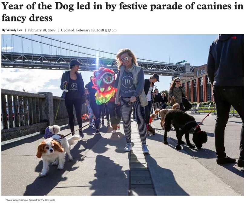 Year of the Dog led in by festive parade of canines in fancy dress