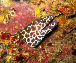 Find morays while scuba diving in Phi Phi