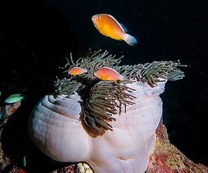 Hyväkuntoista pehmeää korallia ja värikkäitä kaloja