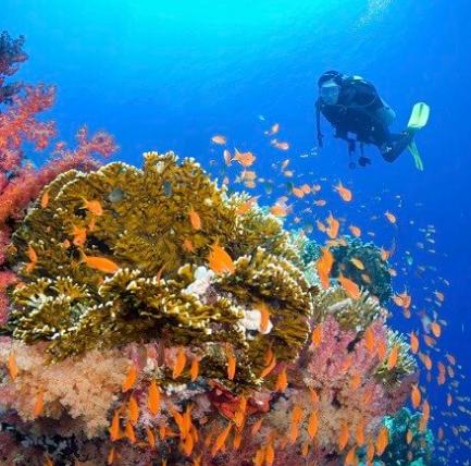 Scuba diver approaching corals
