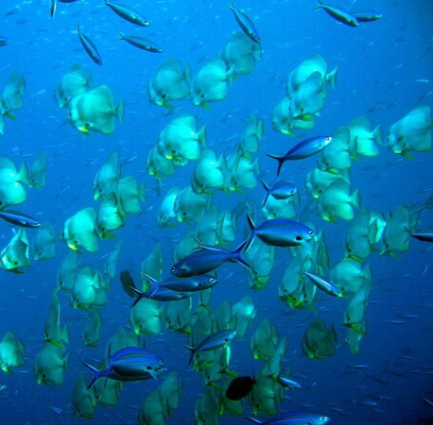 Big school of fish