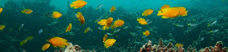 Big shoal of fish in Koh Lanta