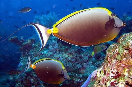 Reefs attract all kinds of fish at Southern Thailand