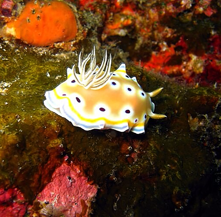 Colorful sea species in Phi Phi island dive sites