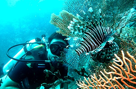 Scuba diver hiding from a lionfish at Similan Islands