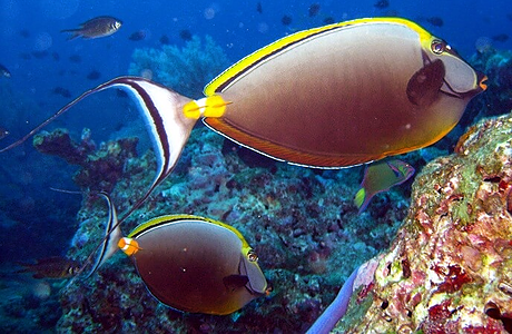 Scuba diving with beautiful fish in phi Phi islands