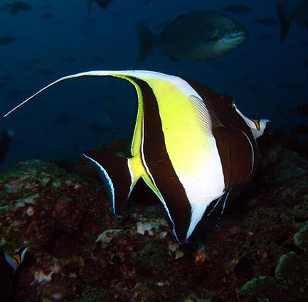 Sukella värikkäiden kalojen seassa