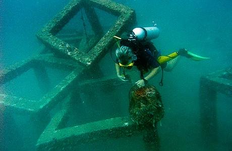 Sukeltaja tutkimassa vedenalaista maailmaa