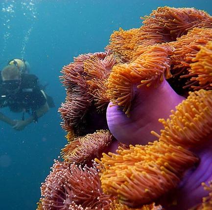 Paljon hyväkuntoista pehmeää korallia