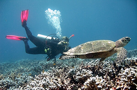 Turtle passing by a scuba diver