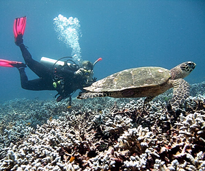 Scuba diving with turtles in Raya Yai islands