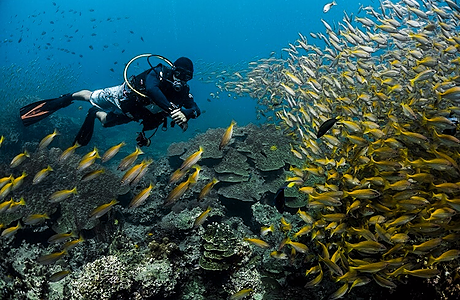 Sukella läpi suurien kalaparvien Raya Noilla