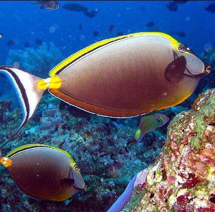 Sukella kauniiden kalojen kanssa