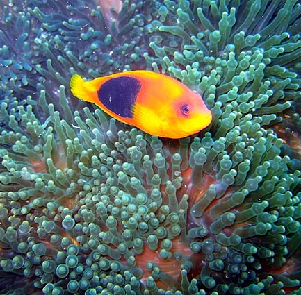 Colorful fish in soft coral
