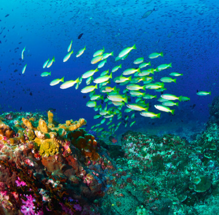Scuba Diving Trips in Raya Yai Island, Thailand