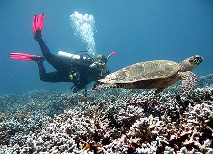 Divers like to photograph glorious turtles