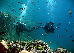 Unique marine life of Similan Islands