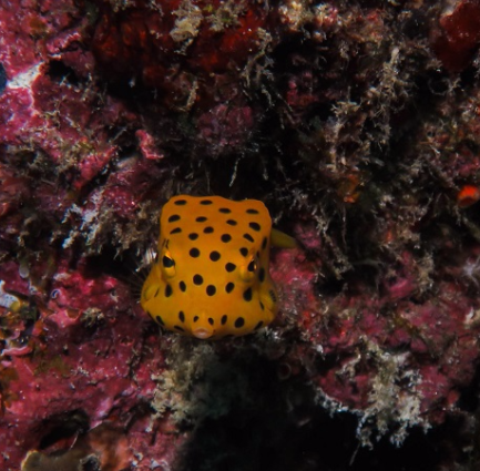 Unique marine life of Koh Rok