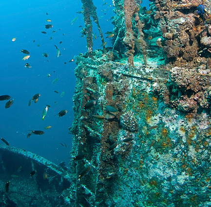 Discover amazing wreck while scuba diving