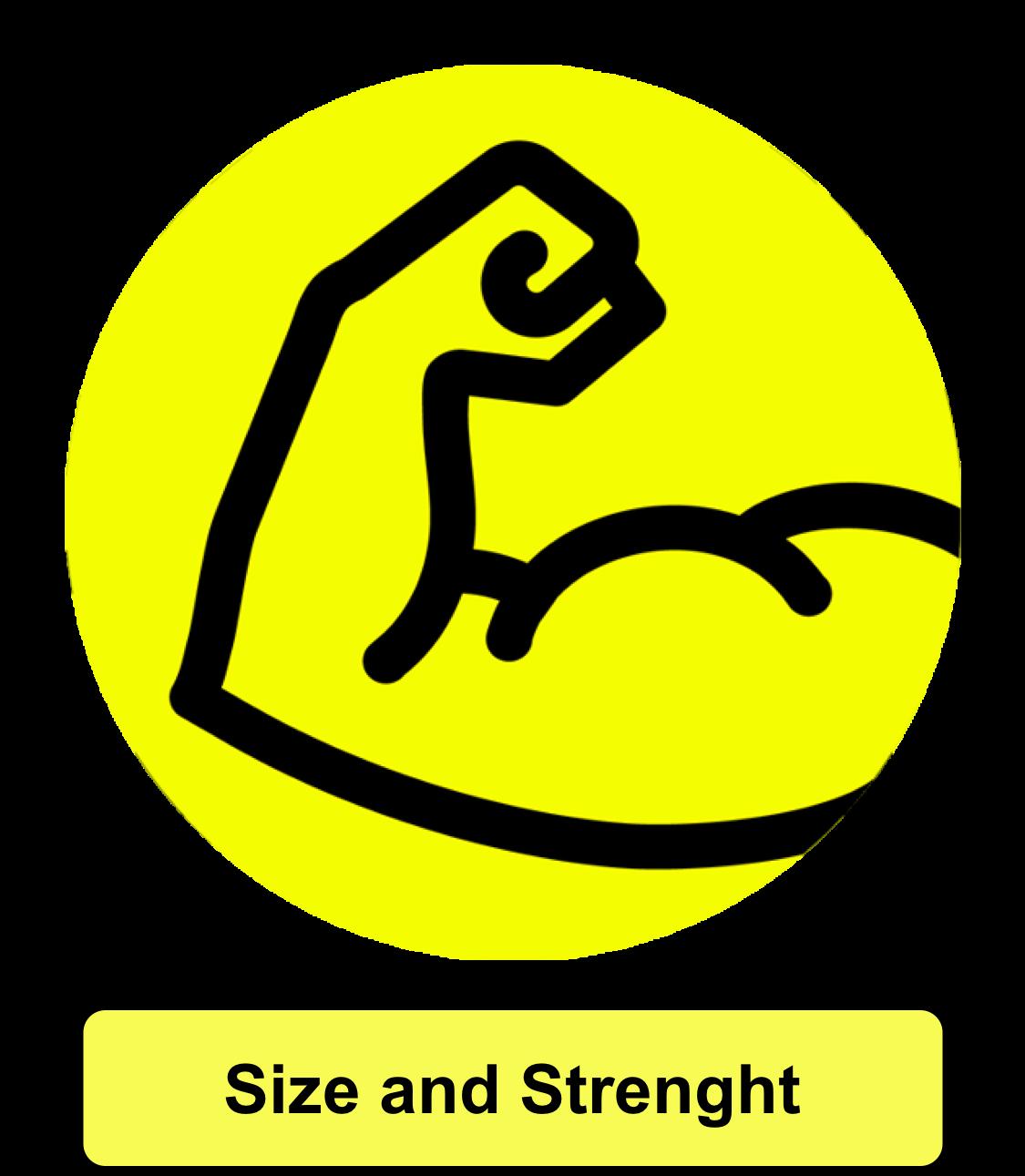 Strength & Size