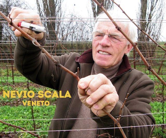 Nevio Scala - Winzer aus den Colli Euganei
